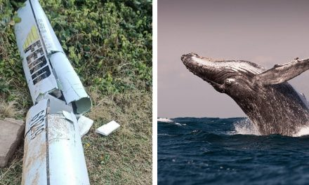 LIGHTNING STRIKES TWICE IN PADDLER'S REMARKABLE WHALE TALE